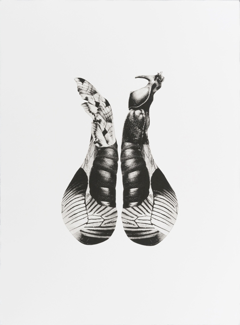 Pollination Series